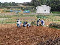 ジャガイモの植付の様子